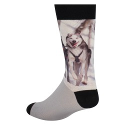 Sock my huskies